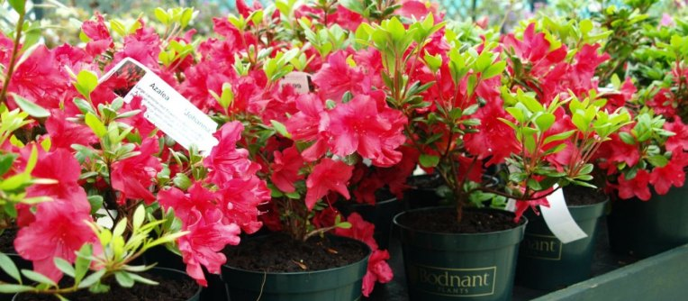 bodnant-plants